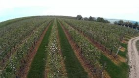 Apple orchard stock footage