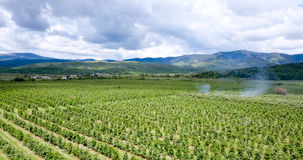 Apple orchards ,aerial view, prespa ,macedonia Stock Photo