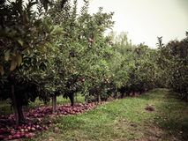Fall at the orchards Stock Images