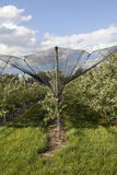 Apple orchards lendscape Royalty Free Stock Photo