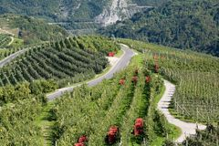 Apple orchards in mountains Stock Photography