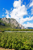 Apple Orchards in Sarca Valley - Trentino Italy Royalty Free Stock Photo