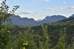 Apple orchards in Tuenno Royalty Free Stock Photo