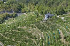 Apple orchards in Tuenno Stock Photo