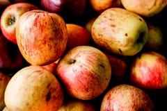 Apple organico fresco fotografia stock libera da diritti