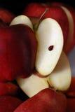 Apple organique Photographie stock libre de droits