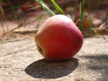 Apple på betong royaltyfri fotografi