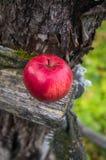 Apple på ett träbräde Royaltyfri Foto
