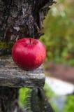 Apple på ett träbräde Arkivbilder