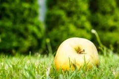 Apple på gräs Royaltyfria Bilder
