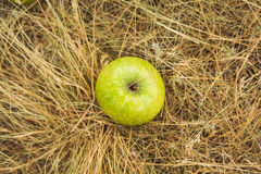Apple på gräset Arkivfoto