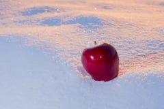 Apple på snow royaltyfri foto