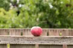 Apple på träasken Arkivbild