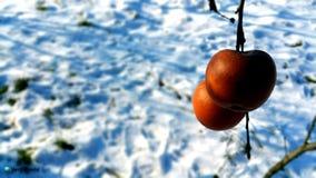 Apple på vintertid Arkivfoto