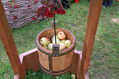 Apple in pail Royalty Free Stock Image