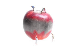 Apple painting Stock Photos