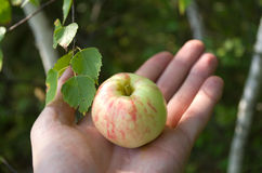 Apple on the palm. Royalty Free Stock Images