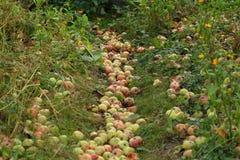 Apple paradis Royaltyfri Fotografi
