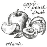 Apple and peach fruit group set hand drawn vector illustration sketch Stock Photos