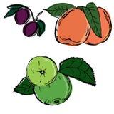 Apple-Pflaumenpfirsichhand gezeichnet Stockfotos
