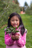 Apple Picking. A Child holding an apple from the orchard Stock Image