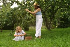 Apple Picking Stock Photo