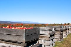 Apple Picking stock images