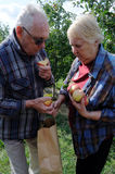 Apple Picking. Senior couple apple picking together.  Model released Royalty Free Stock Image