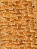Apple Pie Lattice Crust Background Stock Images