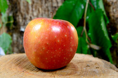 Apple on a piece of wood Stock Photography