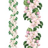 Apple pink flowers. Seamless floral border. Botanical watercolour painted edging stock photography