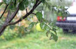 Apple, pioggia, automobile Fotografie Stock Libere da Diritti