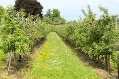 Apple Plantage Στοκ εικόνα με δικαίωμα ελεύθερης χρήσης