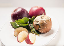 Apple Plate, fresh and rotten Stock Image