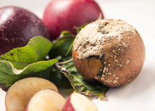 Apple Plate, fresh and rotten Stock Photo