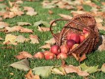Apple plockning Royaltyfria Foton