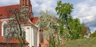 Apple and plum trees bloom in spring near the old catholic church of St. Anne in Vilnius. Apple and plum trees bloom in spring near the old catholic church of St royalty free stock images
