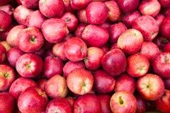 Apple portent des fruits Photos stock