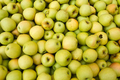 Apple portent des fruits Photos libres de droits