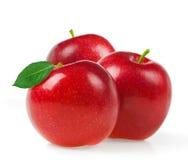 Apple portent des fruits Photographie stock libre de droits