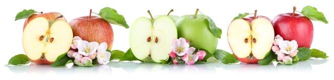 Apple portent des fruits des fruits de pommes dans une rangée coupés en tranches d'isolement sur le blanc Images libres de droits