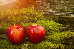 Apple portent des fruits, fruit frais, nourriture saine, Moss Background photographie stock