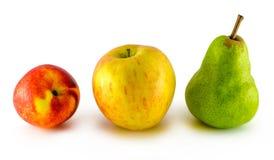 Apple portent des fruits, nectarine, poire d'isolement sur le blanc Images libres de droits