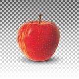 Apple portent des fruits réaliste Photographie stock libre de droits