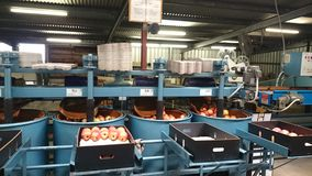Apple Production Line Royalty Free Stock Image