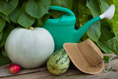 Apple, Pumpkin, Vegetable Marrow, Watering Can And Hat. Red Apple, Pumpkin, Vegetable Marrow, Watering Can And Wicker Hat On Wooden Table Near Green Plant Leaves stock photo