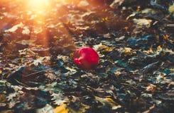 Apple que encontra-se na terra Imagem de Stock Royalty Free