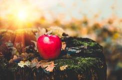 Apple que encontra-se na terra Foto de Stock