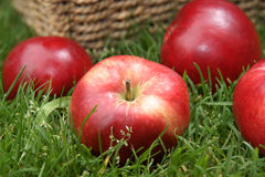 Apple raccoglie Immagini Stock