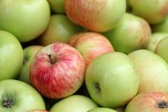 Apple raccoglie Fotografia Stock Libera da Diritti